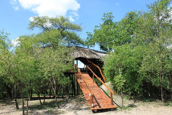 Pezulu Tree House Game Lodge: Falsethorn Treehouse at Pezulu Tree House Lodge