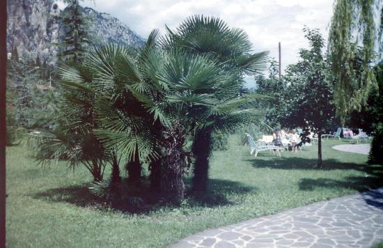 Hotel Garden Arco : De mooie tuin.
