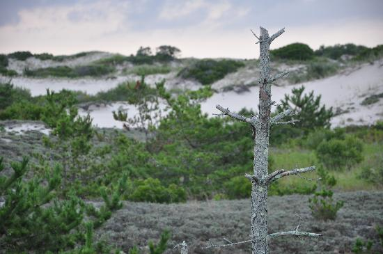 Honeysuckle Hill: Dunes at Sandy Neck