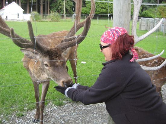 Real Journeys - TSS Earnslaw Vintage Steamship Cruises: Feed the deer