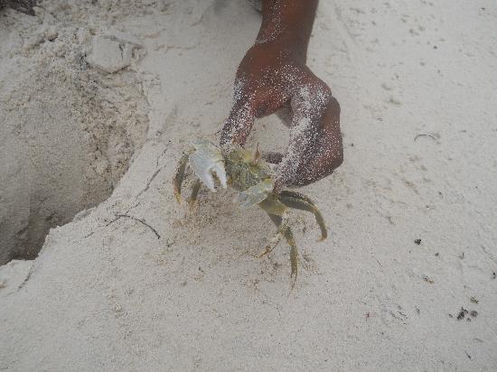 Watamu Beach: il granchetti che stavano sotto la sabbia