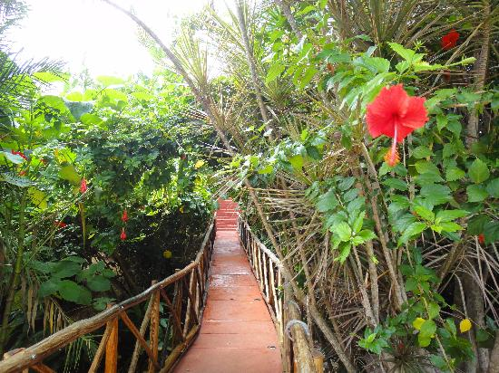 Casa Hamaca Guesthouse: The bridge leading to the front door/porch