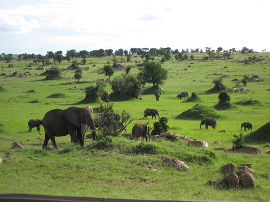 Sayari Camp, Asilia Africa: elephants