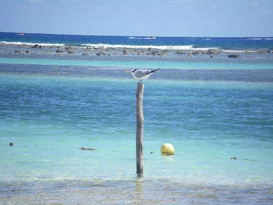 Koox Matan Ka'an Hotel: il mare..incantevole...