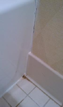 Hawthorn Suites By Wyndham Fishkill/Poughkeepsie Area: MOLD