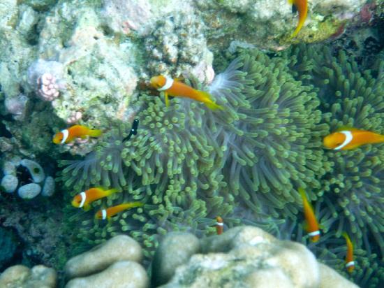 Cocoa Island by COMO: We found Nemo...he's everywhere!