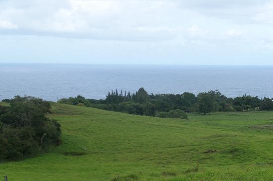 Zip Isle Zip Line: The view from the top of Zip 7