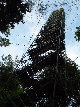 Refugio Amazonas Canopy Tower & Canopy Tower - Picture of Refugio Amazonas Puerto Maldonado ...