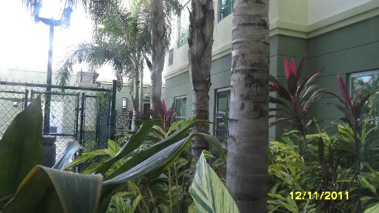 Homewood Suites Ft. Lauderdale Airport & Cruise Port: lovely vegetation