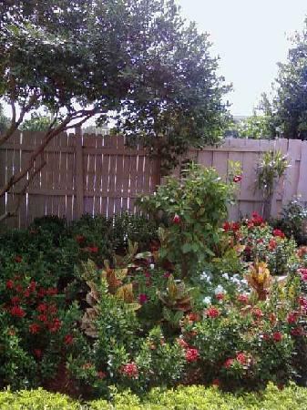 Ramada Plaza Fort Lauderdale: nice tropical flowers