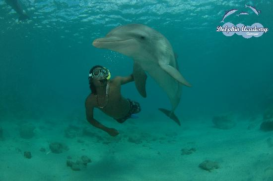 Dolphin Academy Curacao: Dolphin Free Dive (Snorkel)