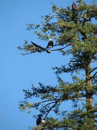 Shoreline Tours and Charters : Harrison River
