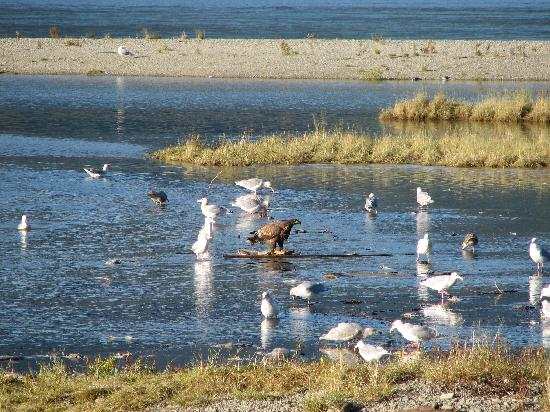 Shoreline Tours and Charters: Harrison River