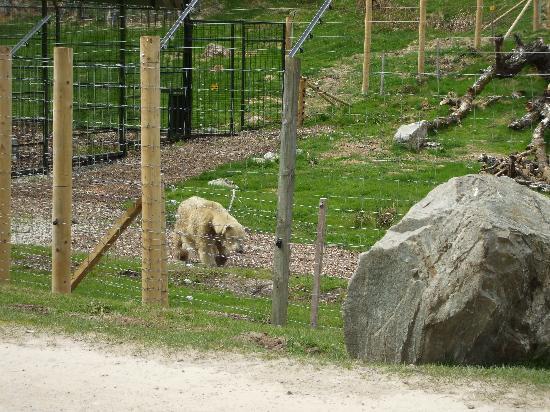 Duke of Gordon Hotel: Mercedes Polar Bear