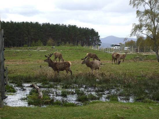 Duke of Gordon Hotel: Highland Wildlife Park