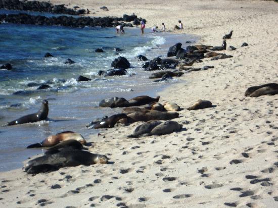 Grand Hotel Lobo de Mar: Lobos marinos