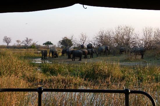 Great Plains Conservation Zarafa Camp: Family gathering - elephant style.