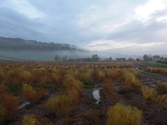 Green Whale Tump B & B: The local asparagus fields
