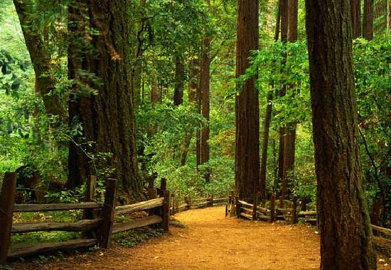 Mission Inn: Henry Cowell State Park