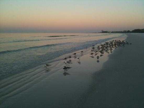 Siesta Key, FL: Dec 7 @ 7:15am