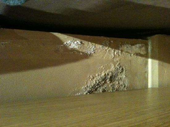 Hyde Park Suites Serviced Apartments: Mould and damp growing up wall !!