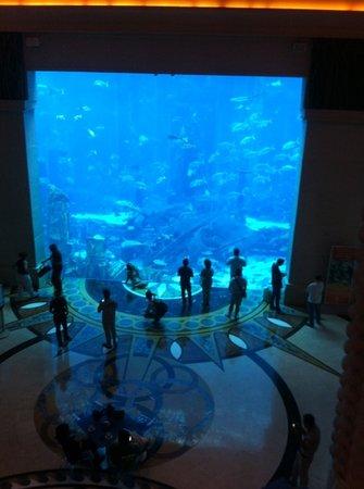 Atlantis, The Palm: aquarium