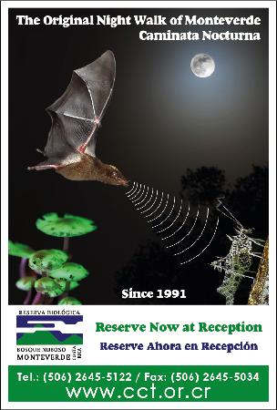 Monteverde Night Walk Costa Rica: Banner