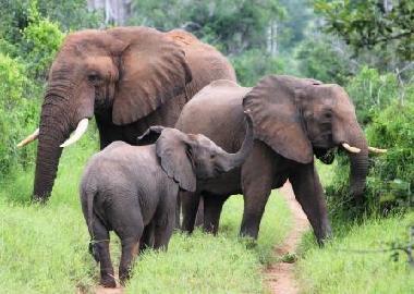Elephants in Kissama.