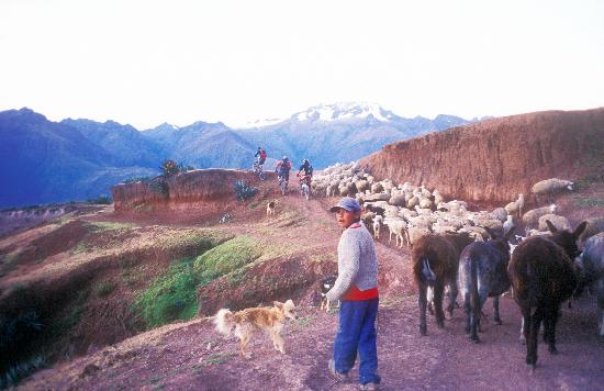 Mountain Bike Tours with Sacred Rides: Rush hour in the Sacred Valley