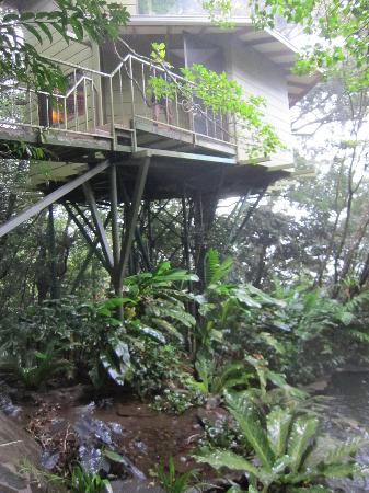 Hidden Canopy Treehouses Boutique Hotel: Neverland from outside
