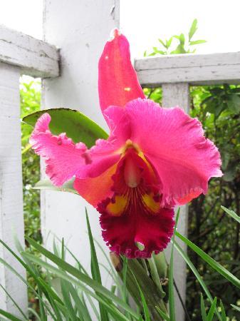 Fuyam Tourist Home: Beautiful orchid