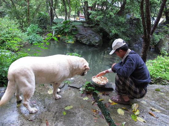 Fuyam Tourist Home: Kero waiting for special treat from Papa Chung