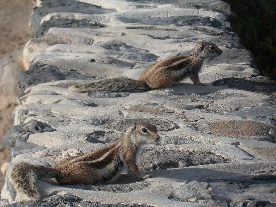 Hotel Elba Carlota : Chipmonks wild but very friendly (at Salt Museum)