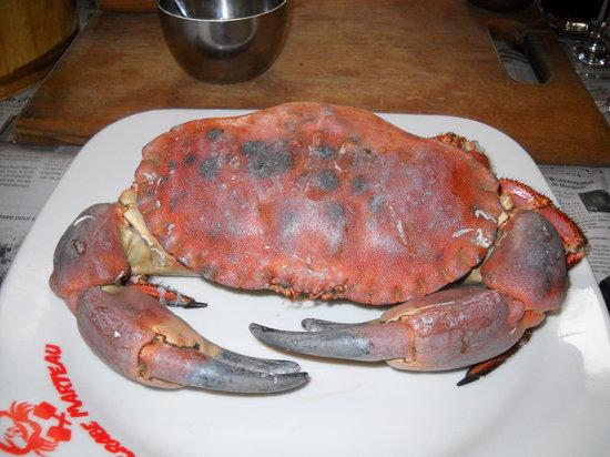 Le Crabe Marteau : LE CRABE !