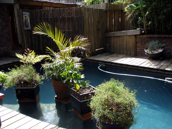 بامبو ذا جيست هاوس: Swimming pool