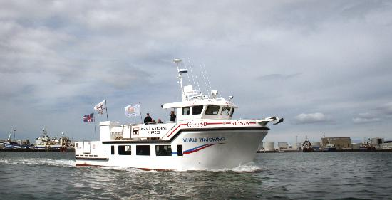 Whale Watching Reykjavik - Special Tours: The fast luxurious boat, Rósin, meaning the Rose.