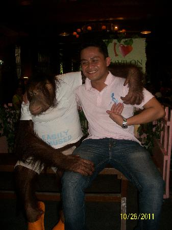 Pasig, Filippinerna: tickling monkey at ark avilon