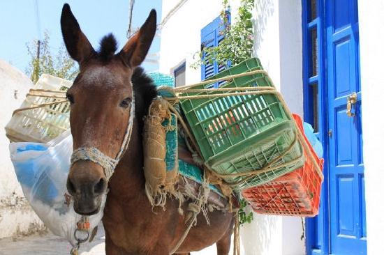 Hotel Aegean Village: Ane de Paros