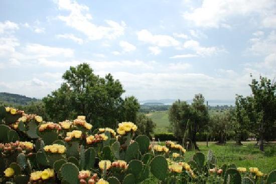 Borgo Sanguineto: La campagna circostante
