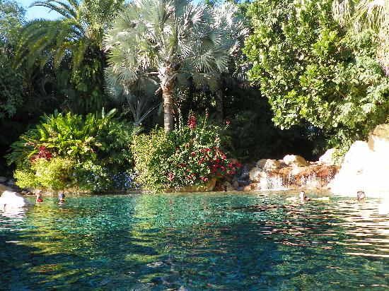 Lazy River Picture Of Discovery Cove Orlando Tripadvisor