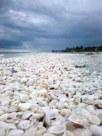 Sandpiper Inn : The shells