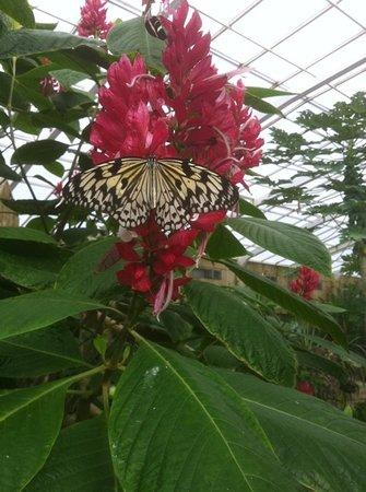 Butterfly Park of Benalmadena