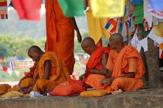 el árbol sagrado de lumbini