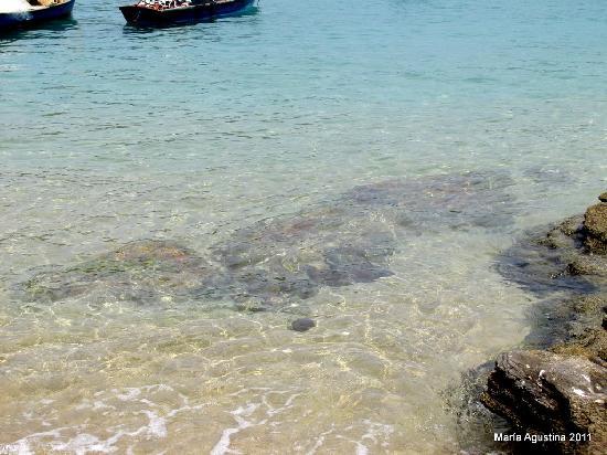Joao Fernandinho Beach: piscina de aguas cristalinas. Ideal snorkel