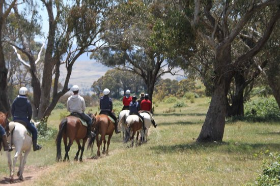 Watson's Mountain Country Trail Rides - Day Tours