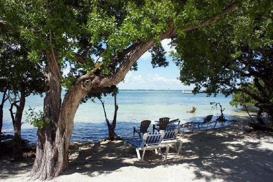 Hilton Key Largo Resort One Of The Beach Areas Within Hotel