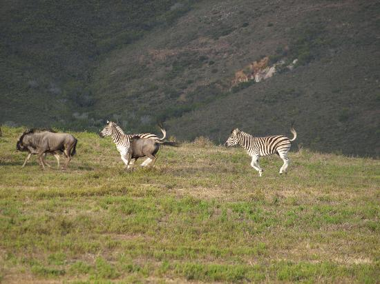 Nyaru Private Game Lodge: wild animals in the reserve