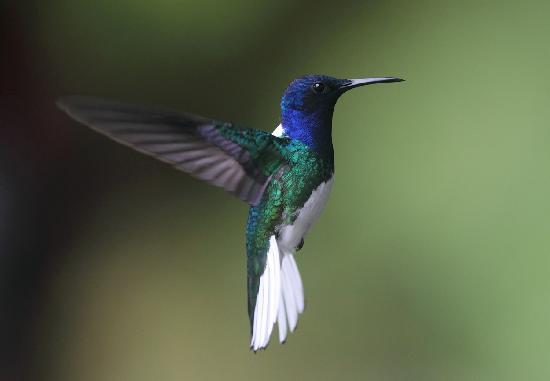 Blue River Resort & Hot Springs : Hummingbird in flight