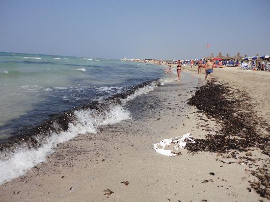 Ugento, Italien: Spiaggia sporca, alghe mai rimosse