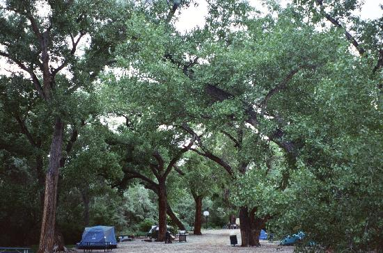 Up the Creek Campground: I slept under the stars/cottonwoods on the picnic table.